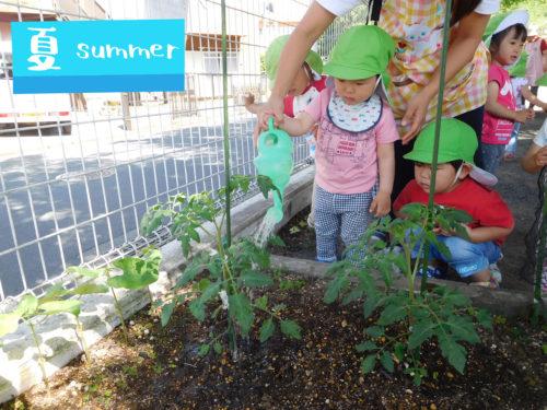 6月野菜栽培